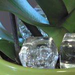 Egy jégkockát tett az orchidea cserepébe, ami egy hét múlva történt, az maga a csoda!
