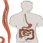 2 erős összetevő, hogy megtisztíthasd a szervezeted a zsíroktól és a parazitáktól