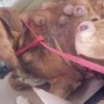 Látták a szomszédok, hogy a nő hazaviszi ezt a kutyát, 2 hónappal később nem hittek a szemüknek