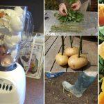 10 hasznos tanács, hogy a kertészkedés örömet okozzon!