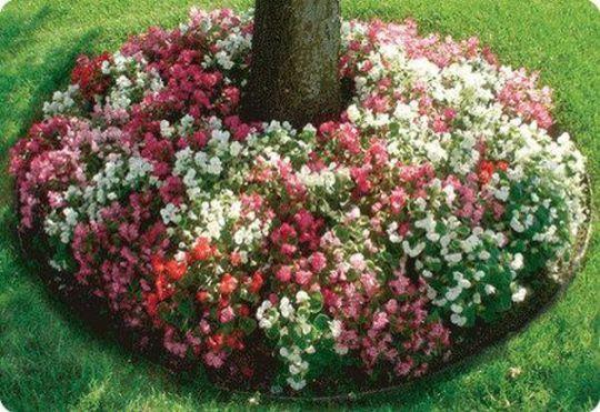 viragok-amelyek-szeretik-az-arnyekot8