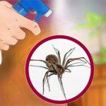 Ez az olaj távol tartja a pókokat! Vegyszerek nélkül kiűzheted őket a lakásodból!