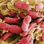 Talán ez az egyszerű szer segíthet a rákellenes szerek létrehozásában