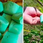 A nő csak zsákba tette a szappant és felakasztotta a kertben. Az eredmény azonnal megtetszett!