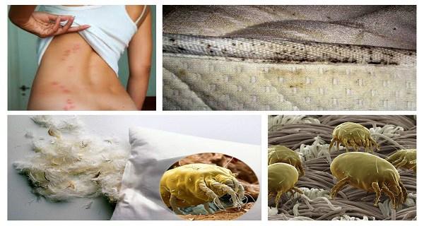 1,5 millió poratka élhet az ágyadban. Pusztítsd el őket ezzel az egyetlen dologgal