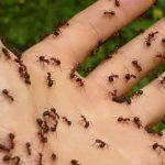 Egyetlen nap alatt minden hangyát eltüntethetsz a lakásból ezzel a szuper, olcsó, házi keverékkel