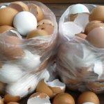 Napokig gyűjtögette a tojáshéjat, nem is hinnéd, mit készített belőle! Káprázatos ötlet!