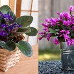 A legellenállóbb szobanövények, amelyeket alig kell gondozni, mégis csodaszépek!