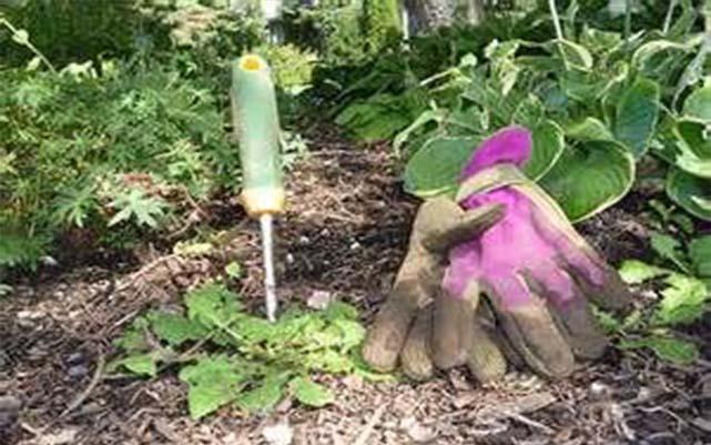 Fújd be ezzel a két egyszerű szerrel a kertet, és nem látsz több gyomot benne!