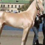 Aranyszőrű ló  A szakértők kiderítették titkát!