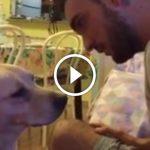A kutya hihetetlen módon kér bocsánatot a gazdájától, ezt csak azok érthetik akik szeretik a kutyákat!