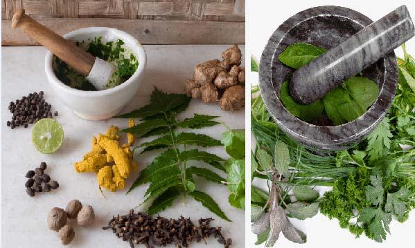 Mindegyik növény helyettesít egy-egy gyógyszert -Mentsd el!