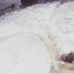 Meg akarták menteni a hóban rekedt kutyát, és akkor vették észre, hogy valami van alatta