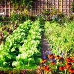Ültesd egymás mellé ezt a 10 növénypárt – Dupla termés várható, és a kártevők is elkerülnek