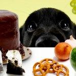 A 31 legegészségesebb étel a kutyáknak – És 13, amit soha ne adj nekik