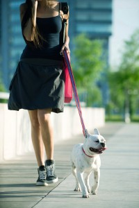 BGYBD3 Young woman walking dog