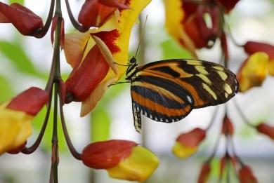 Botanischer Garten Juni 02