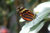 Botanischer Garten Juni 04