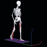 Biomechanical analysis, Gait Analysis, Motion capture system