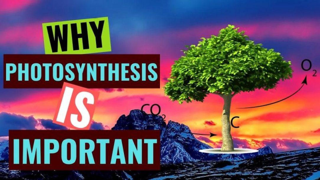 01-photosynthesis-green pigment chlorophyll-ATP-Adenosine Tri-Phosphate