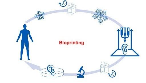 3D-bioprinting-How-does-3D-Bioprinting-Work