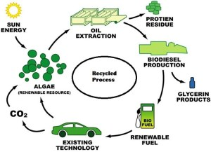 Biodiesel Progress and the Remarkable Future 2020 | Transesterification Reaction | New Biodiesel Materials | Popular Biodiesel Feed stock's| Biodiesel Blends