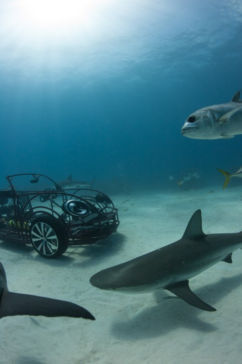small resolution of discovery channel shark week kicks off july 5th shark week 2013
