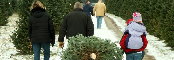Where can we cut our own Christmas tree in central Alabama Jack Ingram Nissan
