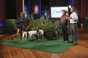 Rent a Goat from Shark Tank