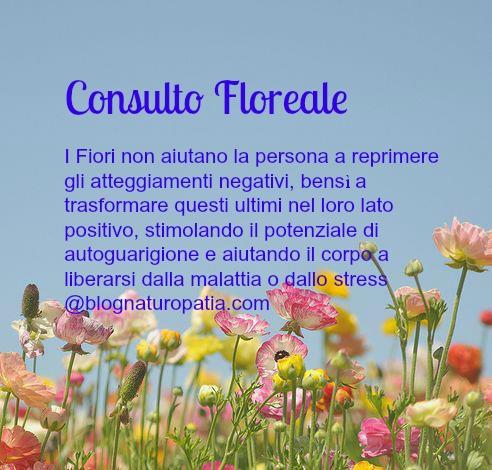 Consulto Floreale