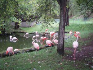 Асахикава Зоопарк