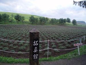 Хоккайдо Лавандовые поля