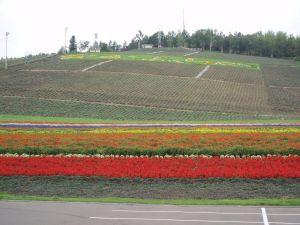 Цветочные поля Фурано