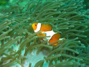 Пхи-Пхи. Подводный мир.