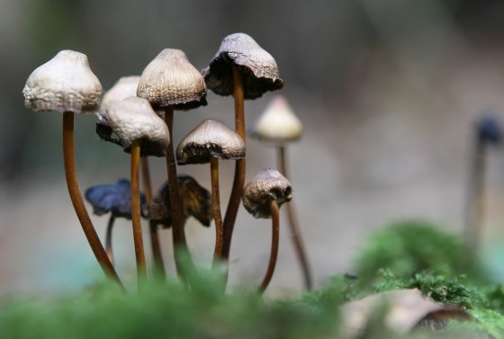 magic-mushrooms-treat-depression