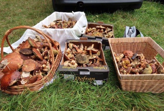 wild-mushroom-picking-czech-republic
