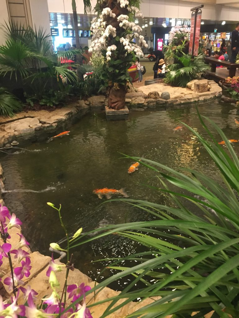 POND WITH KOI CARP