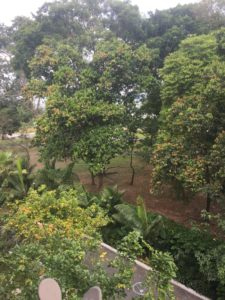 view of greenery from balcony