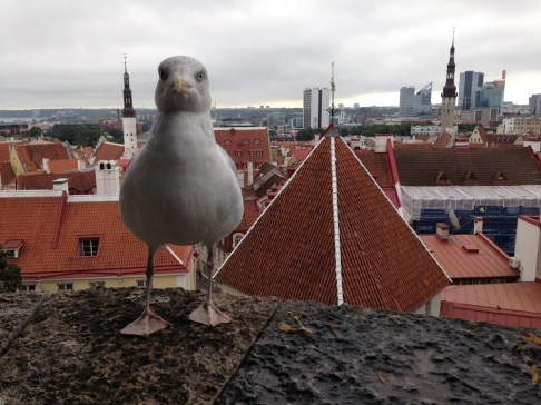 rooftops-of-tallin-and-visitor