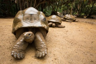 galapagos-3-tortoises