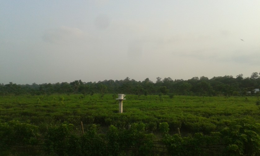 I passed by this tea garden numerous times but never saw this giant tea cup.