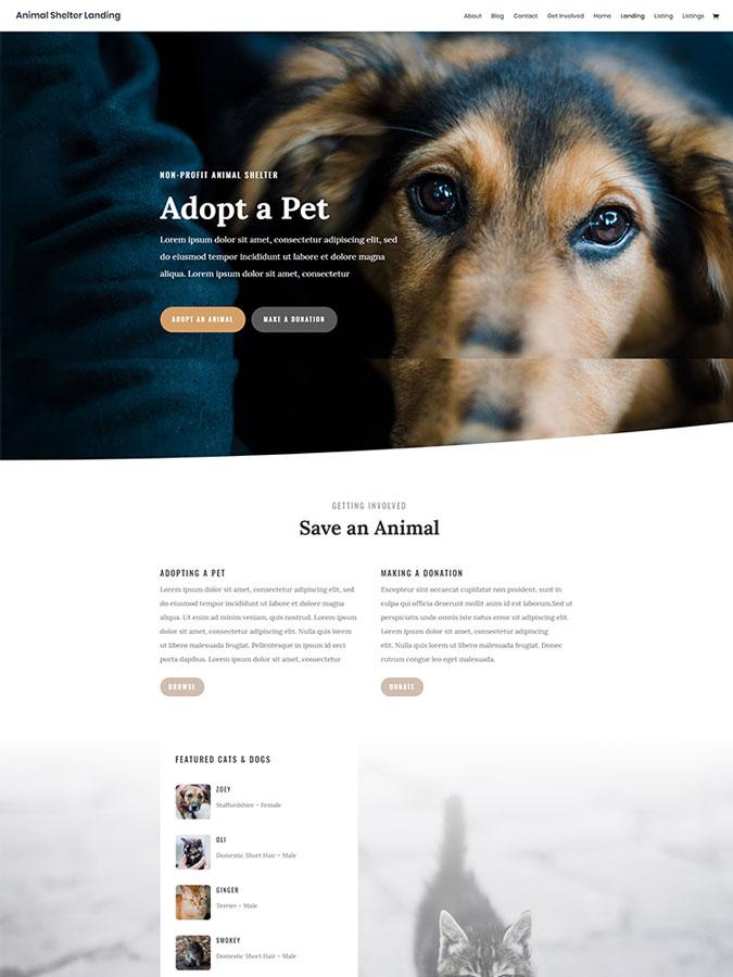 Thème wordpress divi créer site internet animaux animal chien refuge template