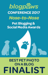 2017 BlogPaws Nose-to-Nose - BEST PET BLOG PHOTO FINALIST badge
