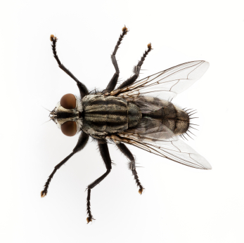 Guide To Common Filth Flies Pest Control And Bug