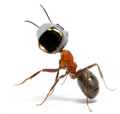 Space Ant