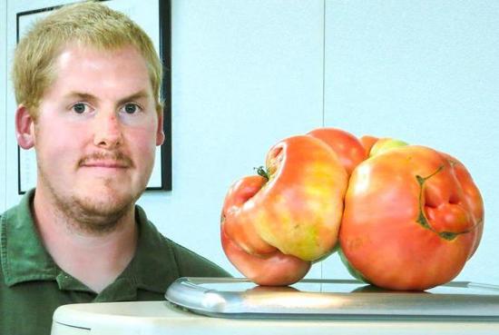 重達近 4 公斤的番茄