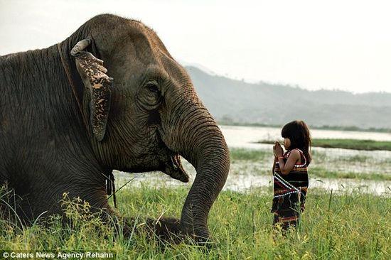金輪和她的寵物象