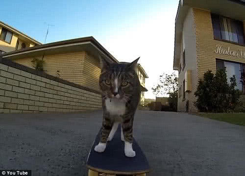 cat skateboarding