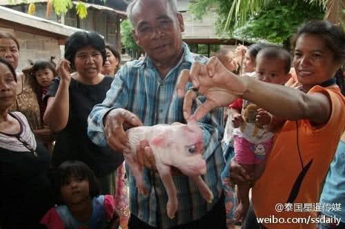 這隻怪異小豬,頭大、眼大,耳如象耳,還長著象牙般的長牙。