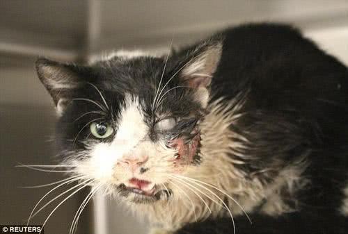 被活埋五天還存活的貓咪